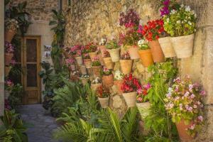 Blumen in Valldemossa